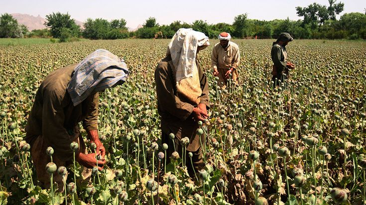 Angela Me, Chief Research and Trend Analysis Branch, UN Office on Drugs and Crime comments on UN report on record opium production in Afghanistan.