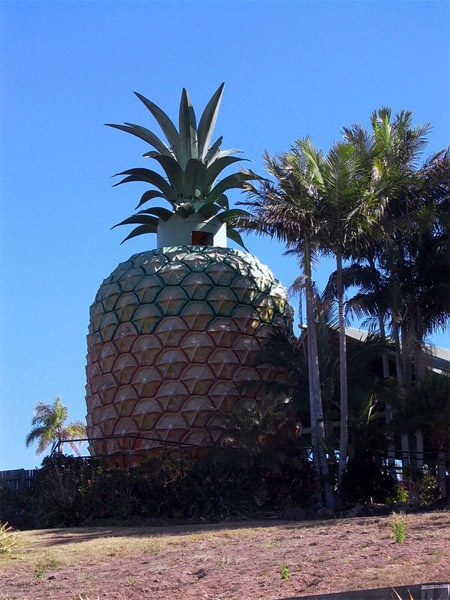 The Big Pineapple is a famous tourist attraction and working farm situated near Nambour:  Anana, Bobs, Big Apples, Unusual Building, Big Pineapple, Architecture, Around The World, House, Place