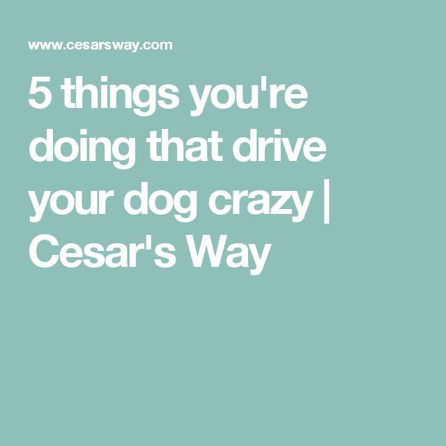 las 25 mejores ideas sobre entrenamiento de cachorros con