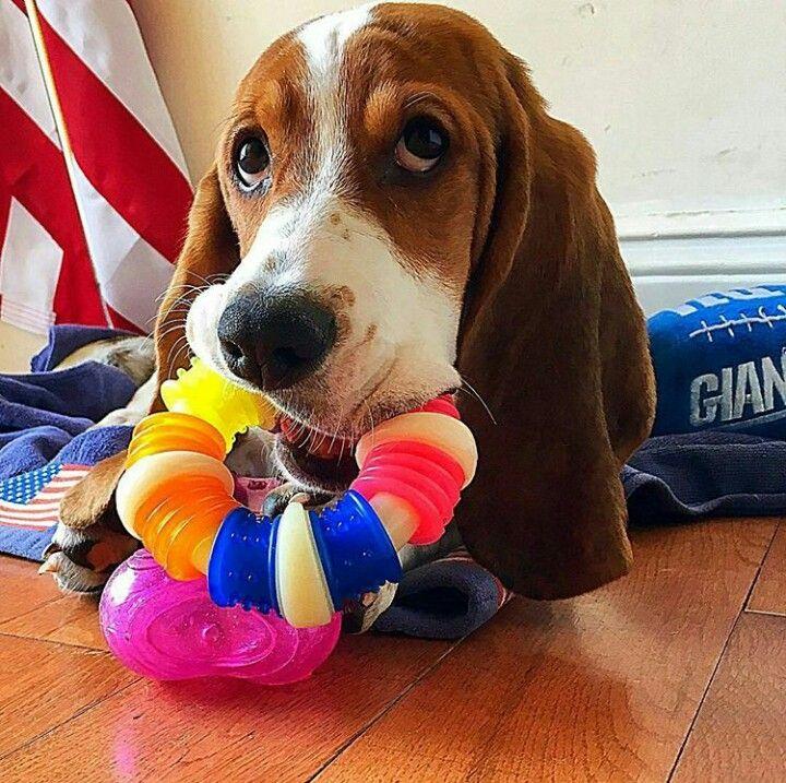I like my toy!!! Thanks mom