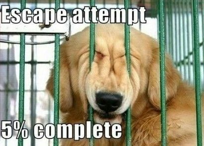 funny pictures of dogs with captions | Visit http://gwyl.io/  for more diy/kids/pets videos