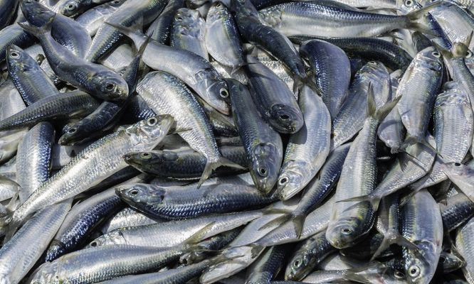 Imagine 4500 Olympic-sized swimming #pools full of fish. That's the amount of #fish dumped into the ocean each year, world-first #research has found.