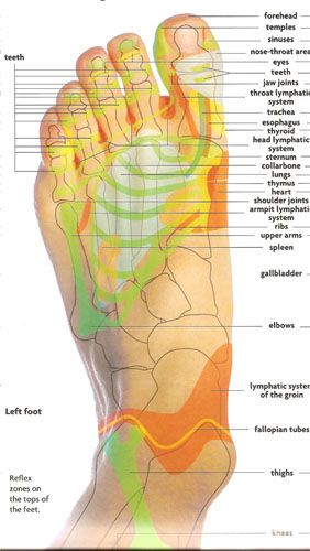 Reflexology points ~ top of foot
