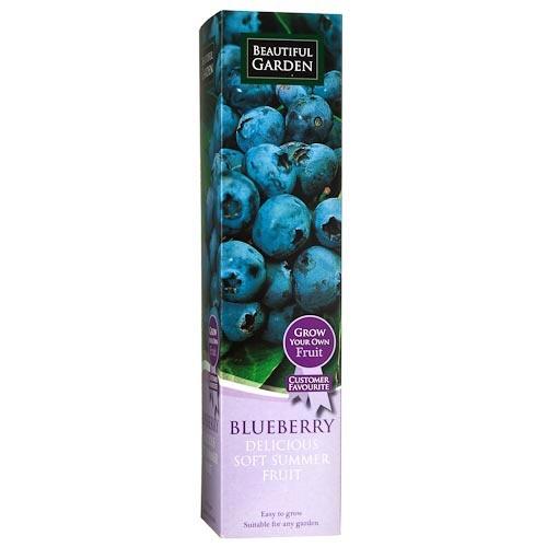 Blueberry Fruit Plant | Poundland