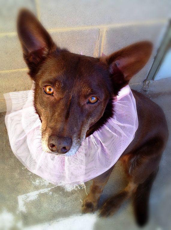 Pink dog tutu pink pet gift for companion animal by GrannyJack,