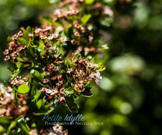 summer_garden-6