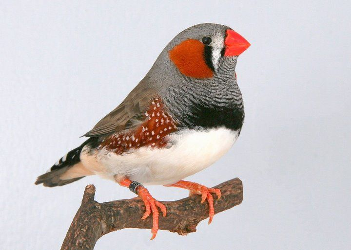 Si Te Gustan Las Aves Este es Tu Post