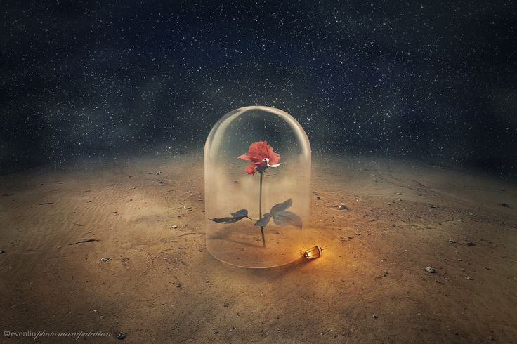 the little prince - one flower which is unique in the world, which grows nowhere but on my planet a photomanipulation / digital artwork with my own photos http://facebook.com/EvenliuPhotoArt