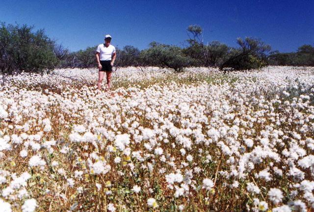 Wild flowers of Western Australia.