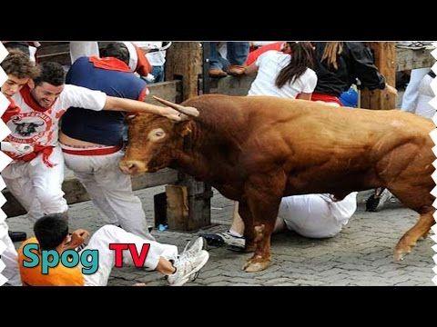 เทศกาลวิ่งวัวกระทิง สุดสยอง ของประเทศสเปน   Spog TV