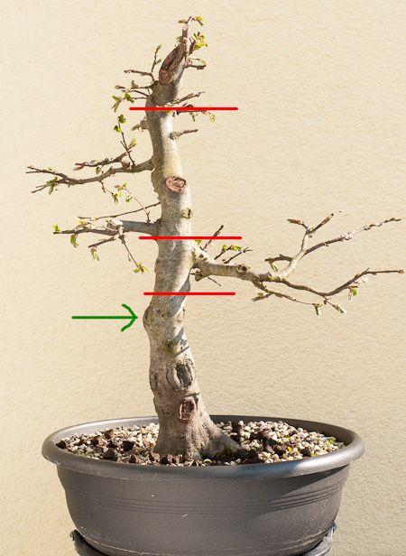 die besten 17 ideen zu bonsai baum auf pinterest a. Black Bedroom Furniture Sets. Home Design Ideas