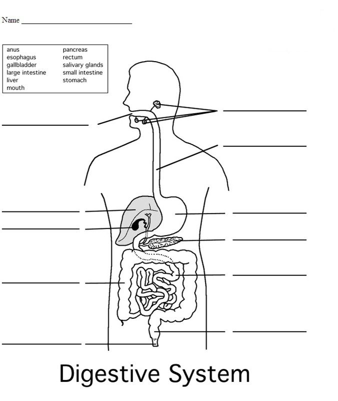 4th Grade Science Worksheets Human Digestive System Digestive
