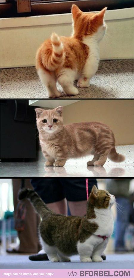 "You NEED To Stop What You're Doing And Look At These ""Corgi-Cats""…"