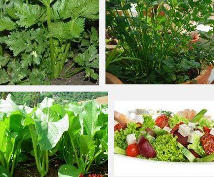 Cara Menanam Sayuran Salad | Cara Menanam Sayur