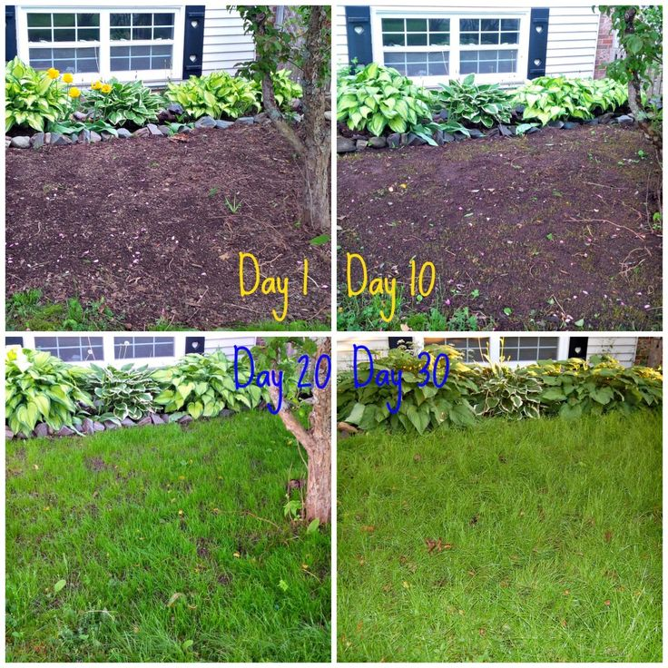 Lessons learned from Growing Grass from Seed! via www.diypassion.com
