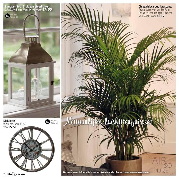 -Natuurlijke luchtverfrisser-   Ga voor meer informatie over luchtzuiverende planten naar www.airsopure.nl
