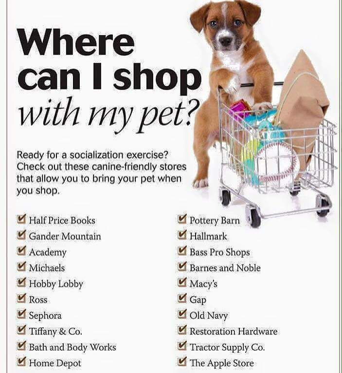 Going shopping? You may be able to bring your pet with you! (Just be careful in Tiffany...) #dogs #cats #pets