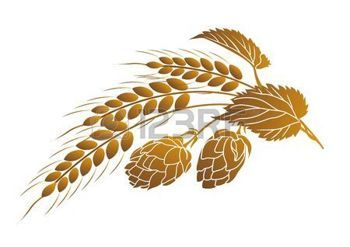 beer background: Iillustration of hops and ears of wheat