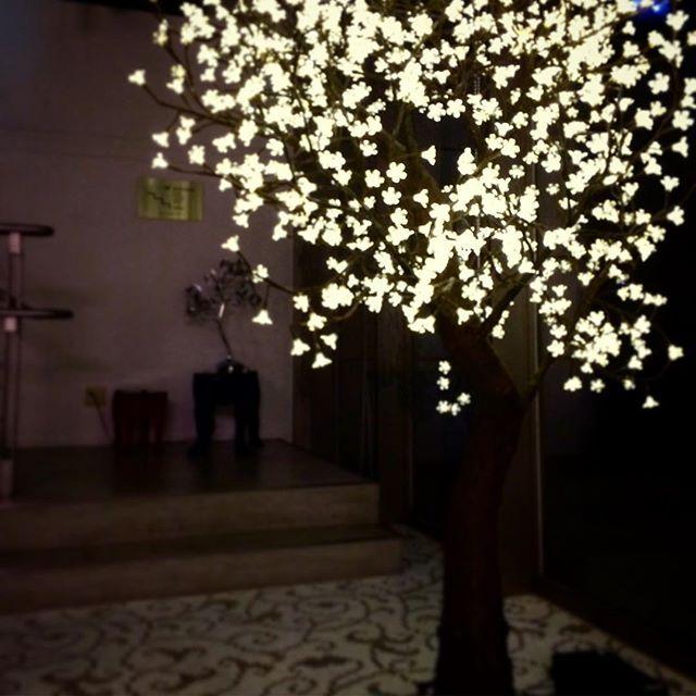 【toyokitchenstyletokyo】さんのInstagramをピンしています。 《花鳥風月S。1年中、桜の美しさを楽しめます。防水加工されており、屋外使用可能です。 http://store.toyokitchen.co.jp/html/search.html?q=花鳥風月S  #toyokitchen #トーヨーキッチン #照明 #フロアランプ #美しい #桜 #sicis #グローリー #glory #floorlamp #花鳥風月》