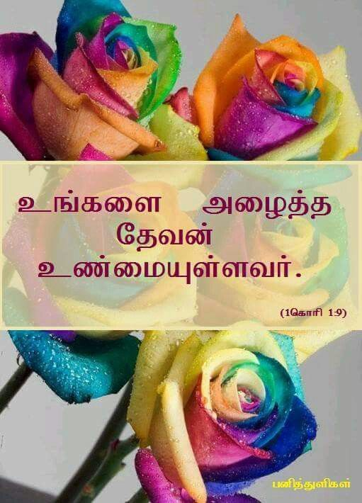 Tamil bible verse, colourful, roses