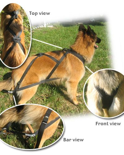 "The Freight harness is designed for heavy weight pulling. It's similar to the X-back harness with the padded neck and the ""X"" design on the back, but the side straps are much longer, extending along the dogs body to beyond the back legs. You'll notice a spreader bar a few inches behind the dogs body. This keeps the pressure off the dogs spine and rear legs, letting the dog dig in and pull with it's chest comfortably and safely. A competition harness has thicker nylon straps designed to pull…"
