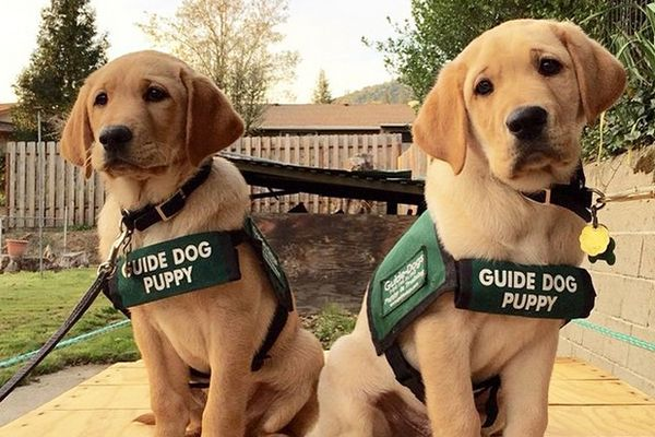 Guide-Dog-2