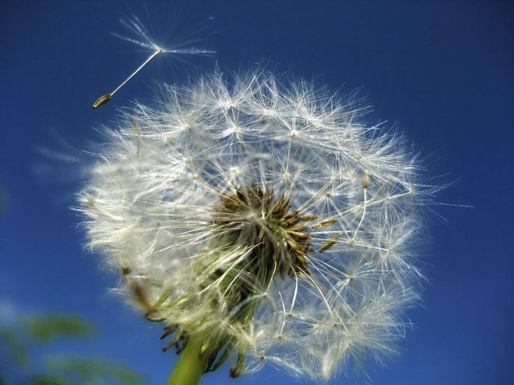 Sweet moments of life Sailing through the winds of time Like dandelion seeds