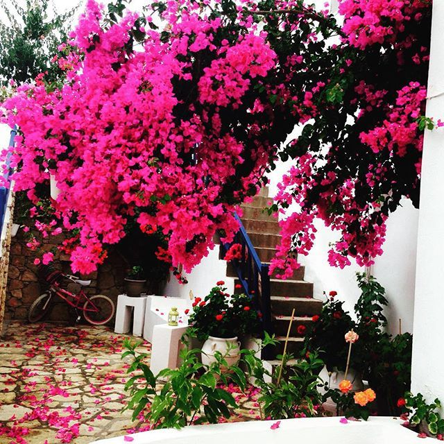 In a secret garden! #Traditional house #Folegandros #Cyclades Photo credits: @korlanmadi