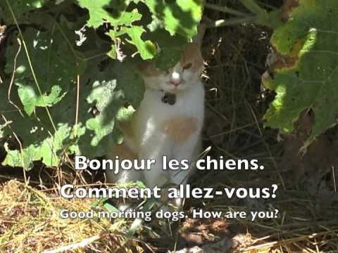 Meeting & Greeting in French: Simple Introductions
