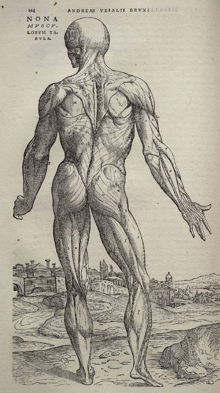Page 194 of Andreas Vesalius' De corporis humani fabrica libri septem, featuring the illustrated