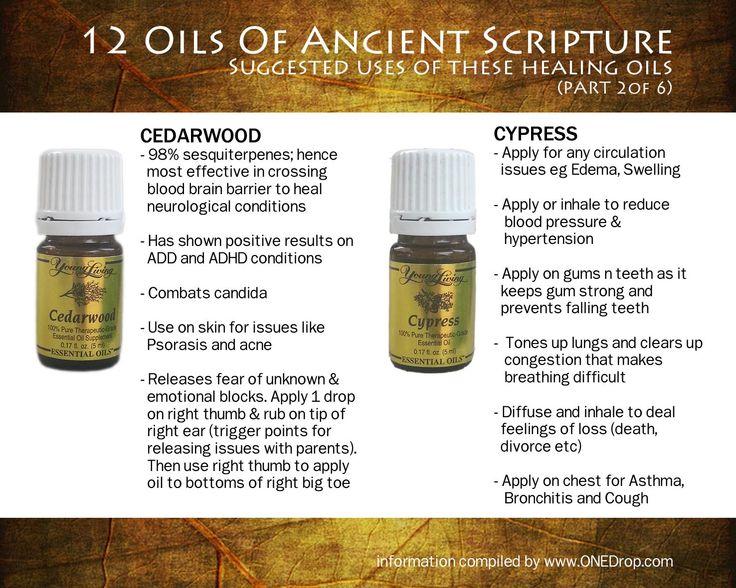 Young Living Twelve Oils of Ancient Scripture: CEDARWOOD & CYPRESS