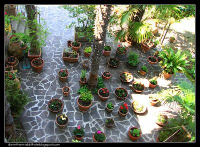 """A flower pot garden in the small Italian village of Assisi. Find out more at """"Down the Wrabbit Hole - The Travel Bucket List"""". Click the image for the blog post."""