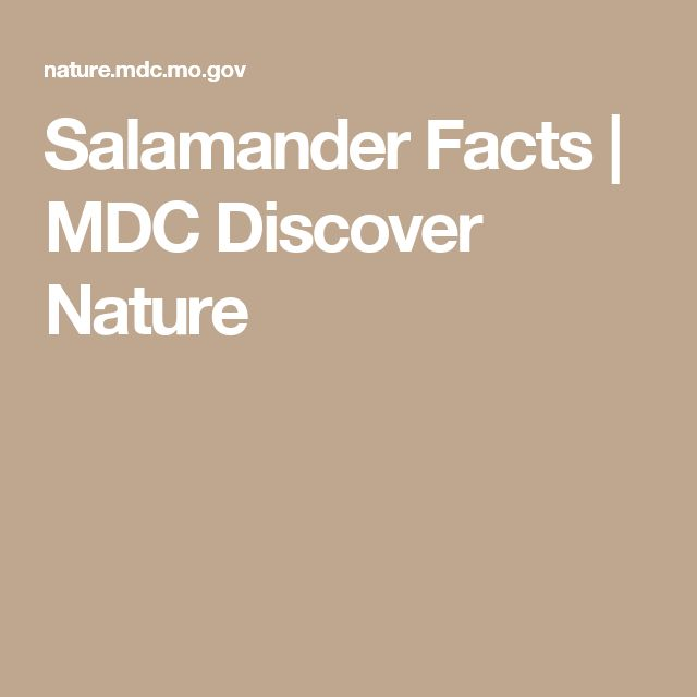 Salamander Facts | MDC Discover Nature