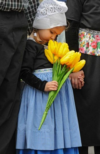 Callista Schermerhorn, age 3 of Guilderland, stops to smell the tulips while dressed in Dutch costum