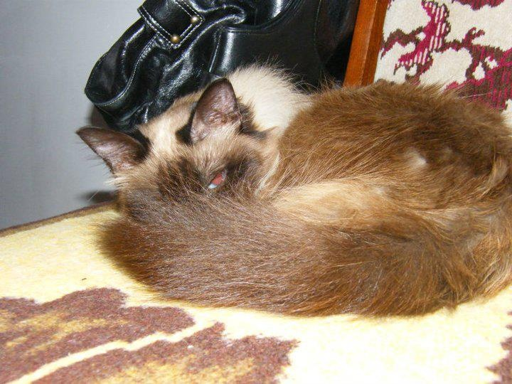 Life, passion and beauty: Ziua Mondiala a Animalelor - Ziua lui Monily ♥