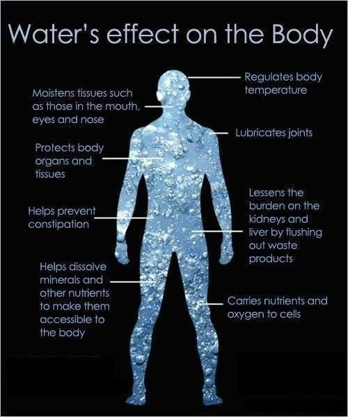 Water's effect on the body