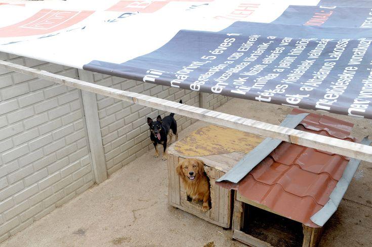 A CIB Bank adománya az Ugat-Lak Alapítványnak  #kutya #dog #jótékonyság #kutyabaráthelyek