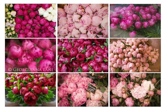 Paris Pfingstrosen Foto Mini druckt - romantisch rosa Blumen, Pariser Blumenmarkt, Wand Dekor, Pfingstrose Fotografien