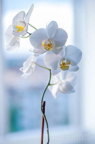 Orquideas. Éste pin tiene record de  Me gusta