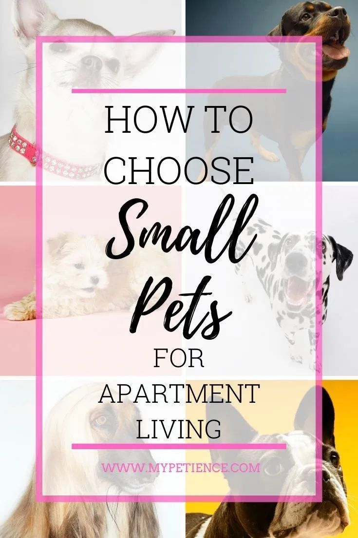 The Best Small Pets For Apartments Small Pet Carrier Tips In 2020 Best Small Pets Small Pets Small Pet Carrier