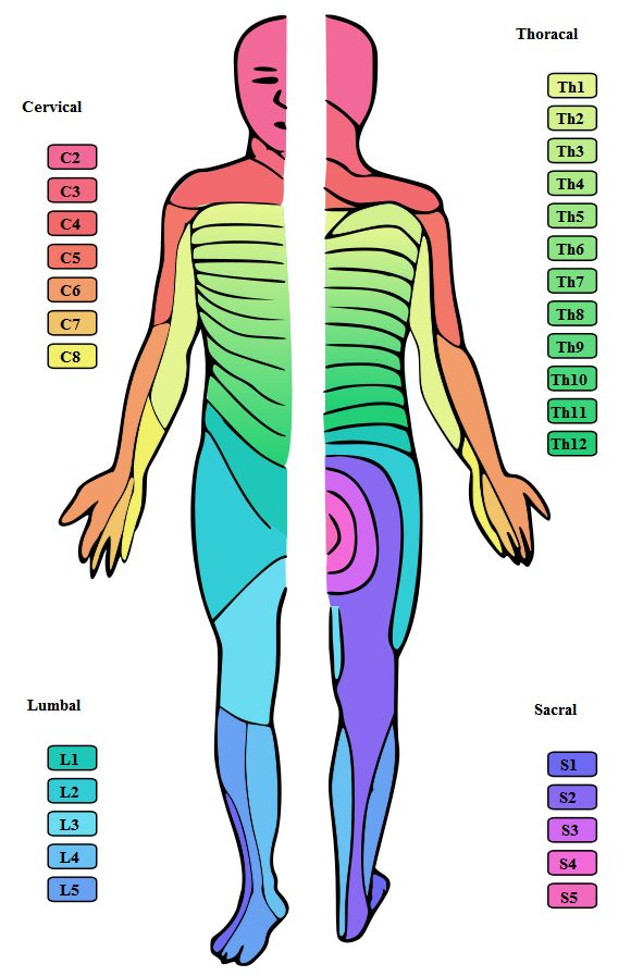 upper extremity sensory nerve distributions - Google Search