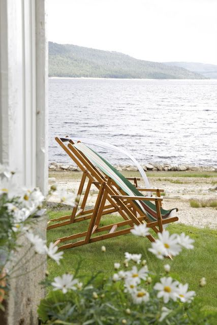 Vintage Beach Chairs and Wild White Daisies at the Beach Cottage.