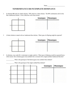 Genotype And Phenotype Worksheet - Synhoff