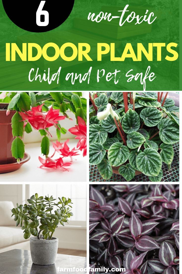 Child And Pet Safe Houseplants 6 Non Toxic Indoor Plants House Plants Indoor Safe House Plants Easy House Plants