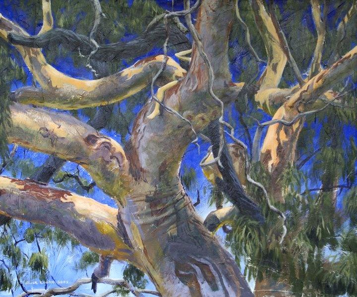 8809_never_never_tree_small_full.jpg 720×600 pixels