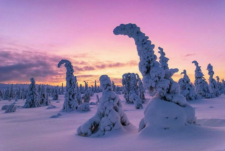 Magic of polar night   Riisitunturi national park , Posio #lapland #finland #finnishlapland #lappi #visitlapland