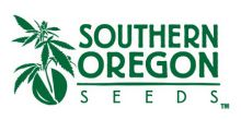 Our Cannabis Seed Bank currently consist of over 28 different seed varieties and growing. We are constantly ordering new inventory. Buy Cannabis SeedsOnline