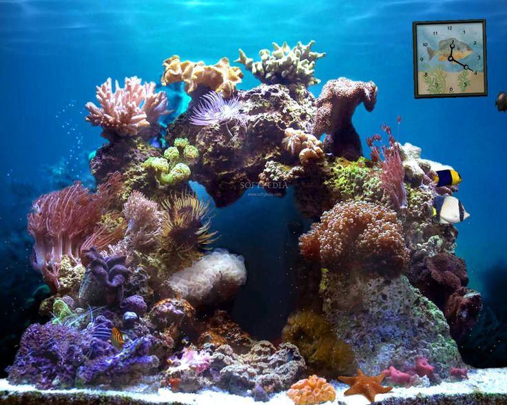 les 25 meilleures id es de la cat gorie fond d cran aquarium sur pinterest fond d 39 cran. Black Bedroom Furniture Sets. Home Design Ideas