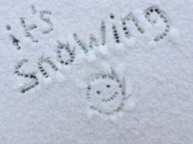 It's snowing everyone! By Alison Chambers.