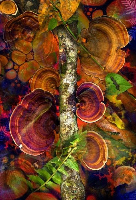 Fungi that is so beautiful in color.